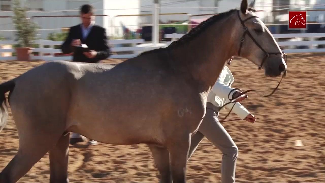 festa-do-cavalo-de-porto-salvo-2019